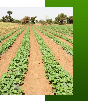 Irrigation Supplies